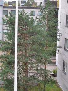 フィンランド暮らしの嫁日記-雪が降る