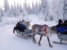 フィンランド暮らしの嫁日記-トナカイそり