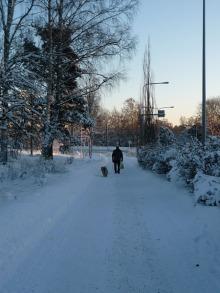 フィンランド暮らしの嫁日記-犬の散歩