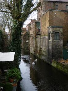 フィンランド暮らしの嫁日記-運河の白鳥