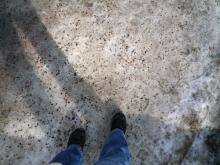 フィンランド暮らしの嫁日記-雪と砂利