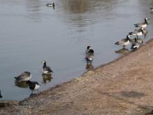 フィンランド暮らしの嫁日記-鳥も集合