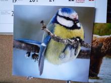 フィンランド暮らしの嫁日記-鳥も木から落ちる