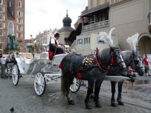 フィンランド暮らしの嫁日記-観光馬車