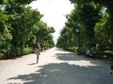 フィンランド暮らしの嫁日記-並木道