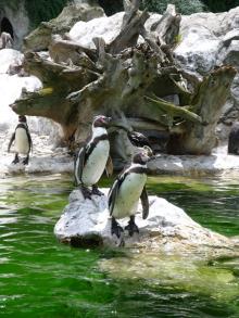 フィンランド暮らしの嫁日記-ペンギン